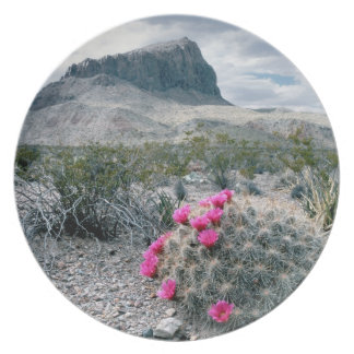 U.S.A., Texas, Big Bend National Park. Blooming Party Plate