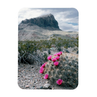 U.S.A., Texas, Big Bend National Park. Blooming Magnets