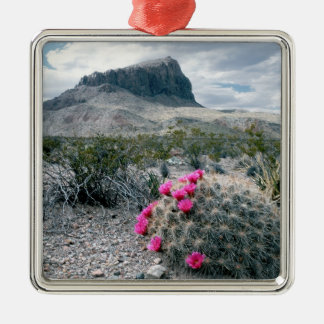 U.S.A., Texas, Big Bend National Park. Blooming Silver-Colored Square Decoration