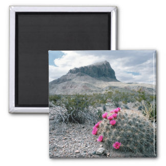 U.S.A., Texas, Big Bend National Park. Blooming Square Magnet