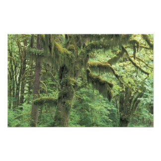 U.S.A., Washington, Olympic National Park. Photo Print
