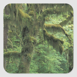 U.S.A., Washington, Olympic National Park. Square Sticker
