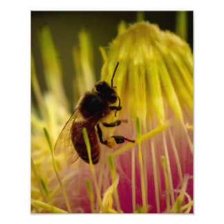 UCSC - Bee on Flower print