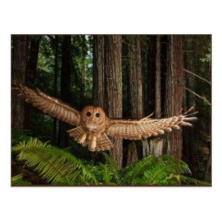 uilen wenskaarten