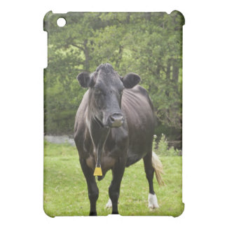 UK, England, Cumbria, The Lake District, Cow in Case For The iPad Mini