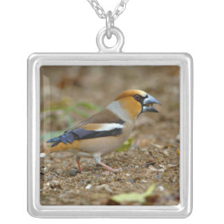 UK, England, Gloucestershire.  Hawfinch Silver Plated Necklace