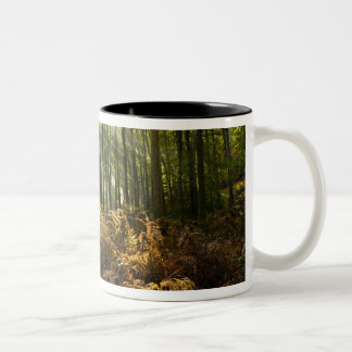 UK, England. Rays of sunlight streaming through Two-Tone Coffee Mug