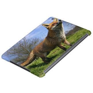UK, England. Red Fox Vulpes vulpes) in