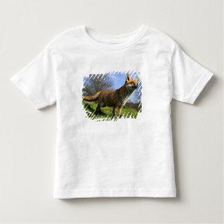 UK, England. Red Fox Vulpes vulpes) in Toddler T-Shirt