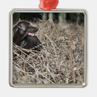 UK, England, Suffolk, Thetford Forest, Black 2 Christmas Ornament