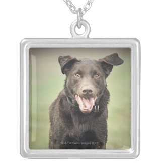 UK, England, Suffolk, Thetford Forest, Black dog Silver Plated Necklace