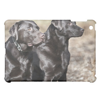 UK, England, Suffolk, Thetford Forest, Black iPad Mini Case