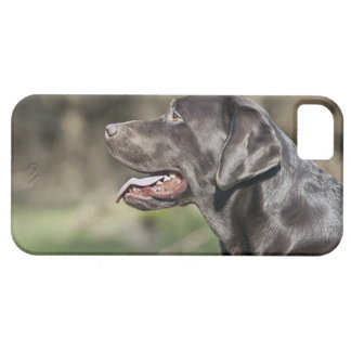 UK, England, Suffolk, Thetford Forest, Profile iPhone 5 Case