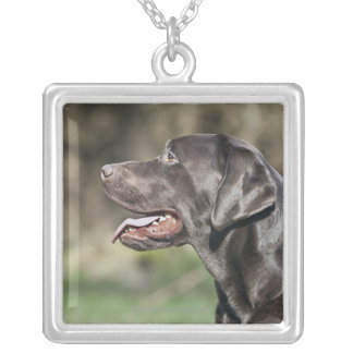 UK, England, Suffolk, Thetford Forest, Profile Silver Plated Necklace