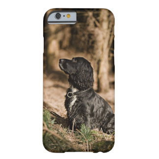UK, England, Suffolk, Thetford Forest, Spaniel Barely There iPhone 6 Case