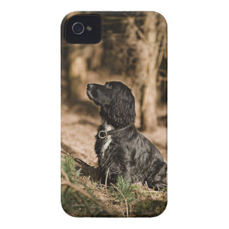 UK, England, Suffolk, Thetford Forest, Spaniel iPhone 4 Covers