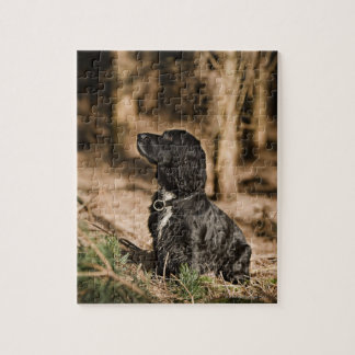 UK, England, Suffolk, Thetford Forest, Spaniel Jigsaw Puzzle