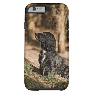 UK, England, Suffolk, Thetford Forest, Spaniel Tough iPhone 6 Case