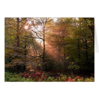UK. Forest of Dean. Sunbeam penetrating a Greeting Card
