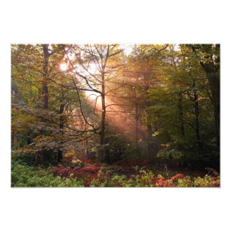 UK. Forest of Dean. Sunbeam penetrating a Photo Print