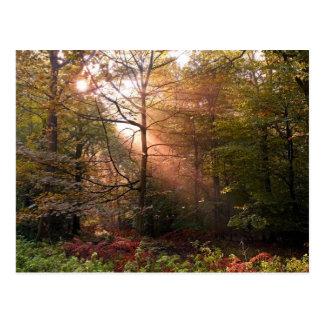 UK. Forest of Dean. Sunbeam penetrating a Postcard