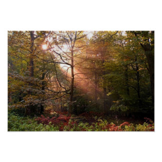 UK. Forest of Dean. Sunbeam penetrating a Poster
