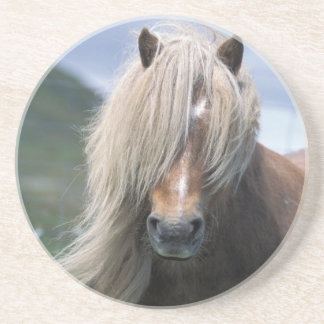 UK, Scotland, Shetland Islands, Shetland pony Coaster