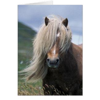 UK, Scotland, Shetland Islands, Shetland pony Greeting Card