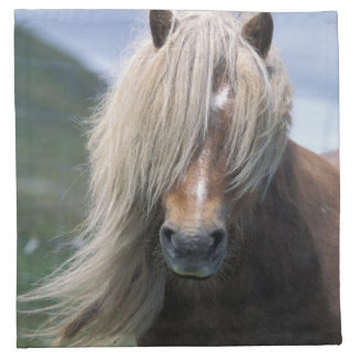 UK, Scotland, Shetland Islands, Shetland pony Napkin