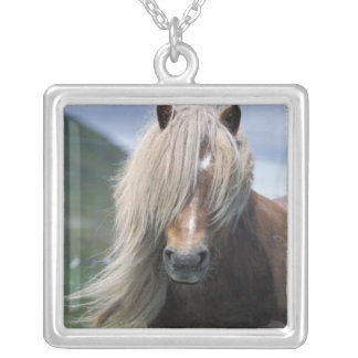 UK, Scotland, Shetland Islands, Shetland pony Silver Plated Necklace