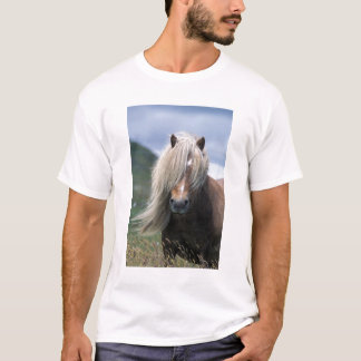 UK, Scotland, Shetland Islands, Shetland pony T-Shirt