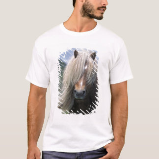 UK, Scotland, Shetland Islands, Shetland pony T-Shirt