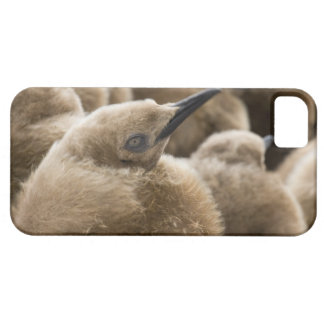 UK Territory, South Georgia Island. Close-up of iPhone 5 Cases