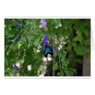 ULYSSES BLUE BUTTERFLY RURAL QUEENSLAND AUSTRALIA GREETING CARD