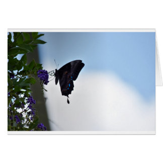ULYSSES BUTTERFLY AUSTRALIA ART EFFECTS GREETING CARD