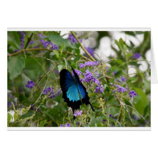ULYSSES BUTTERFLY IN RURAL QUEENSLAND AUSTRALIA GREETING CARD