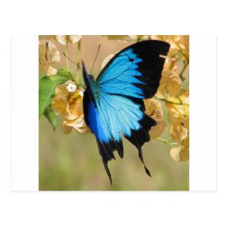 Ulysses Butterfly Postcard