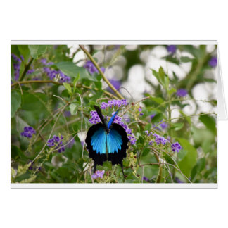 ULYSSES BUTTERFLY RURAL QUEENSLAND AUSTRALIA GREETING CARD