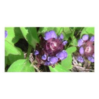 Umatilla Oregon Flora Flowers Plants Botany Photo Card