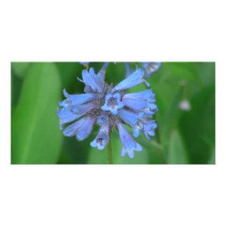 Umatilla Oregon Flora Flowers Plants Botany Picture Card