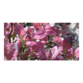 Umatilla Oregon Flora Flowers Plants Botany Photo Greeting Card