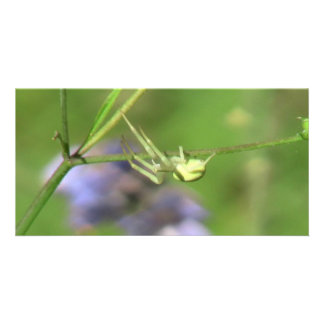 Umatilla Oregon  Insects / Arachnids Bugs Fauna Photo Card Template