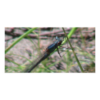 Umatilla Oregon  Insects / Arachnids Bugs Fauna Photo Card