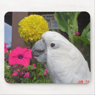 Umbrella Cockatoo Mousepad