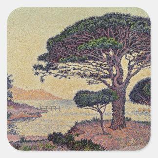 Umbrella Pines at Caroubiers, 1898 Square Sticker