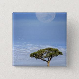 Umbrella Thorn Acacia, Acacia tortilis, and 15 Cm Square Badge