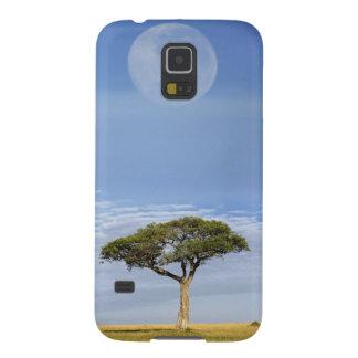 Umbrella Thorn Acacia, Acacia tortilis, and Galaxy S5 Covers