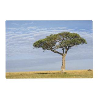 Umbrella Thorn Acacia, Acacia tortilis, and Laminated Place Mat