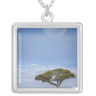Umbrella Thorn Acacia, Acacia tortilis, and Silver Plated Necklace