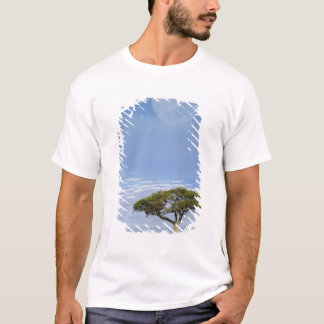 Umbrella Thorn Acacia, Acacia tortilis, and T-Shirt